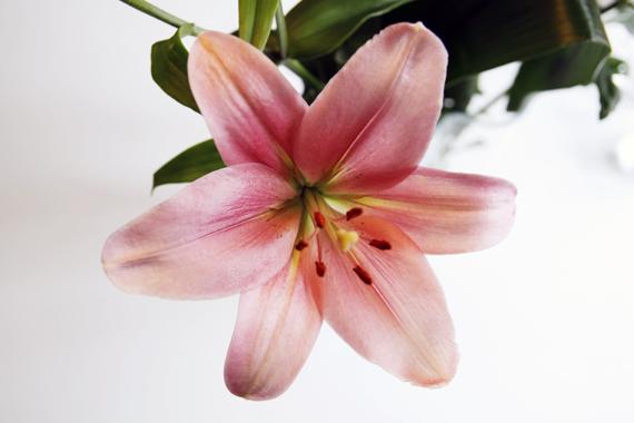 lilja inspirera mera blomma fredag inredningsblogg blogg inredning inspiration